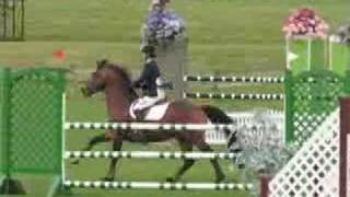 Popular Videos - Novalis & Horses