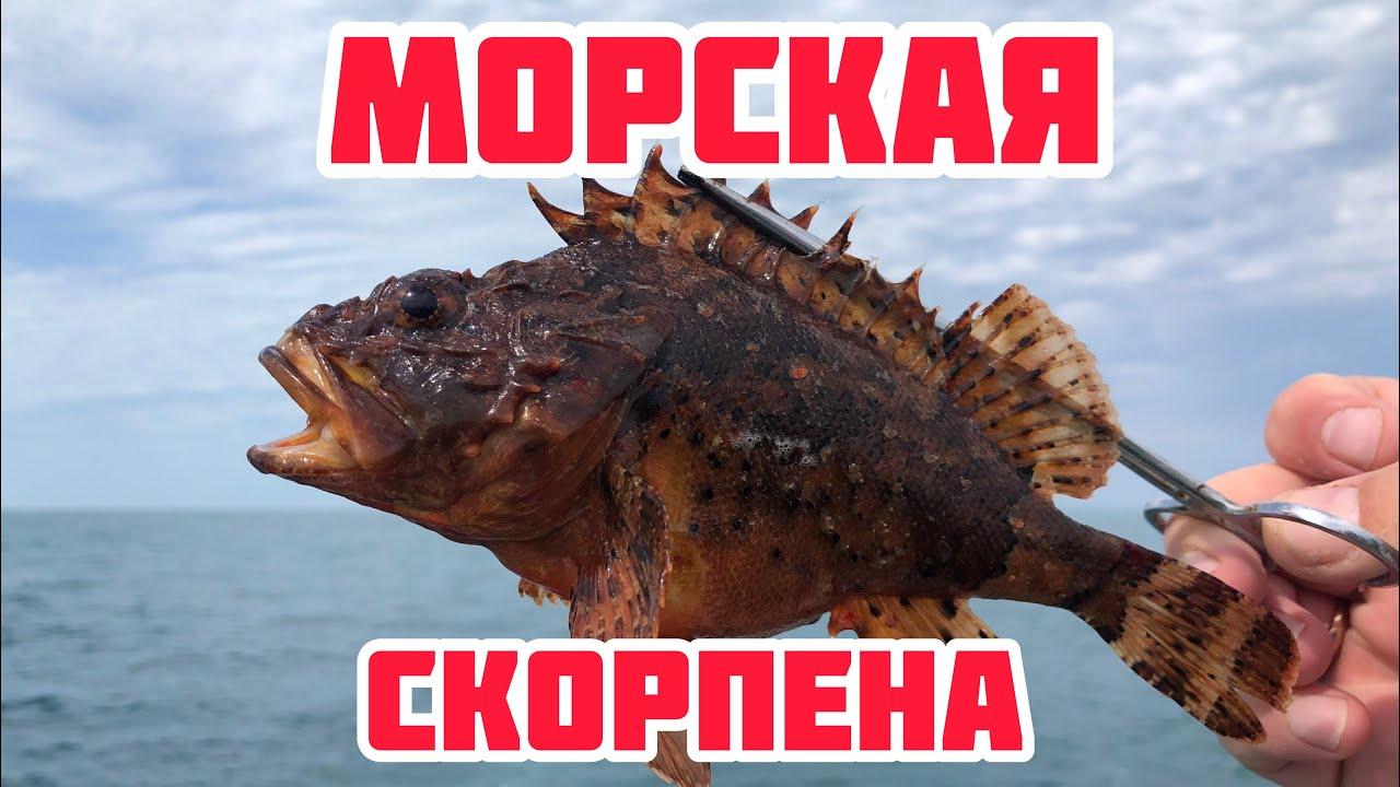 Ах, Одесса . Рыбалка в Черном море. Ловля ставриды и морского бычка.