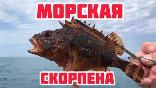 Ах Одесса Рыбалка в Черном море Ловля ставриды и морского бычка