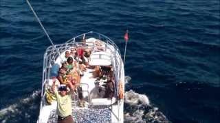 Catalina Island Parasailing Tour Operators