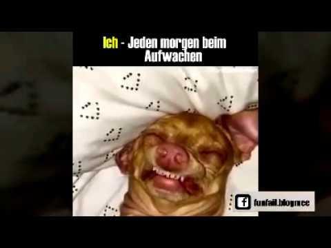 Videos Zum Lachen