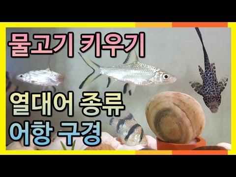 물고기 키우기 실제 🐢 열대어 키우기  실버�