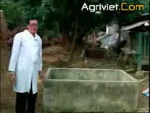 Sử dụng Rơm cho Bò sữa (I)