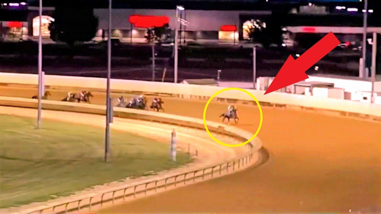 Молодой конь уверенно шёл к финишу! Но в последние секунды что-то пошло не так!