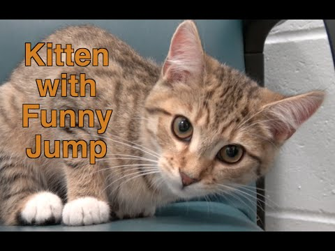 Hilarious Kitten with Funny Kitten Jump and Arched Back | Funny Kittens Playing at Shelter