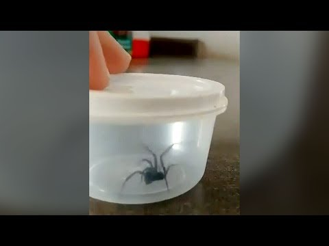 Canadian Man Says He Found This Dangerous Spider In His Groceries