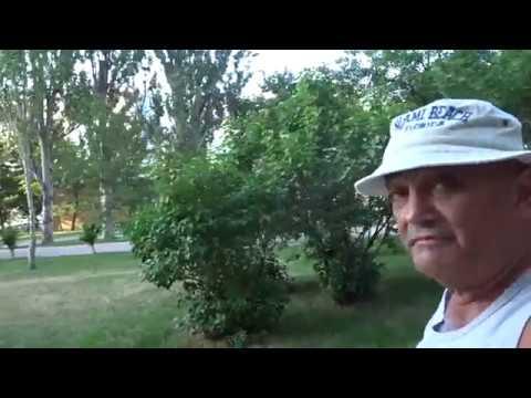 июнь 2019г.новороссийск.9-й микрорайон.ул.Г.Десантников
