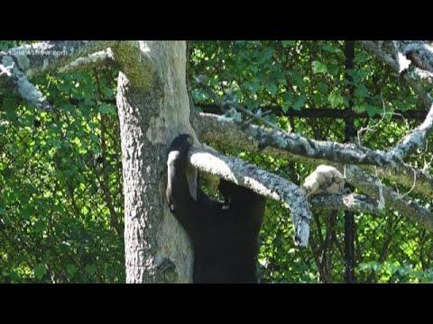 THE SCIENCE BEHIND: Animal Behavior At Virginia Zoo