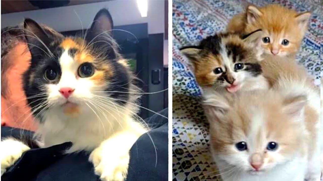 Schwangere Katze in letzter Sekunde von der Straße gerettet...
