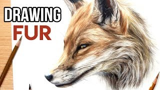 How to Draw Realistic Fur with Coloured Pencils | Drawing Tutorial