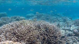 Snorkeling At Tumon Beach In Guam 괌 투몬비치에서 스노클링