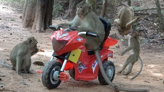 Wow! Monkeys flying motorcycle - The monkeys love playing RC Motorcycle