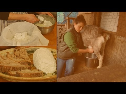 How to Make Soft Goat's Milk Cheese: Chvre