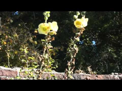 Colclough Walled Garden Tintern Abbey Hook Peninsula