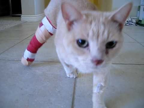 how to tell if your cat has a broken leg