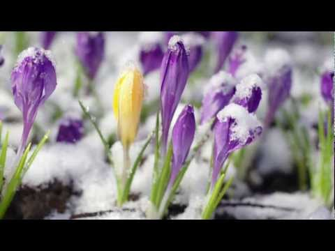 Spring Snow: Piano Solo by MASAKO, composer and pianist