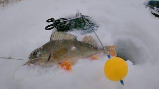 ЖЕРЛИЦЫ 2021 Ловля ОКУНЯ на жерлицы Рыбалка на жерлицы Фишка Петрова КЛЁВАЯ и китайские дешманские