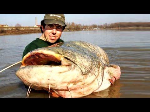 Самая Большая в мире пойманная Рыба # Сом 117кг