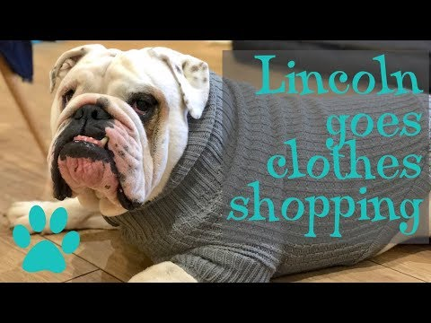 Lincoln goes clothes shopping | ENGLISH SHOPPING