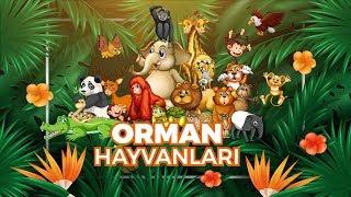 Hayvanları Tanıyalım  Orman Hayvanları Öğreniyorum  Hayvan Sesleri Görüntüler  Eğitici Çizgi Film