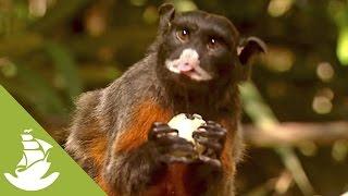 Primates diversity in the Brazilian Amazon Rainforest