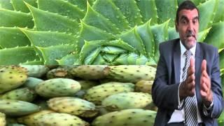 فوائد الصبار للوجه وللبشرة وللجنس وللشعر وللأمراض  Dr mohamed al fayed  محمد الفايد  fayed
