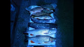 Ловля ТРОФЕЙНЫХ голавлей на ночной яме Рыбалка на реке Агидель Ночую на реке