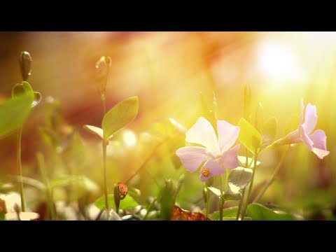 "Peaceful Music, Relaxing Music, Instrumental Music, ""Wind Song"" by Tim Janis"