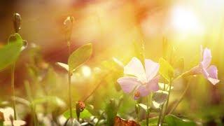 Peaceful Music, Relaxing Music, Instrumental Music, 'Wind Song' by Tim Janis