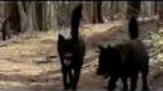 甲斐犬の兄弟 陸と太郎が富士山で遊ぶ.