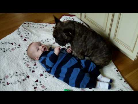 French Bulldog and Baby
