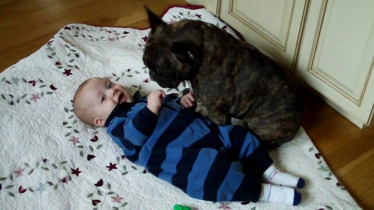 french bulldog and baby