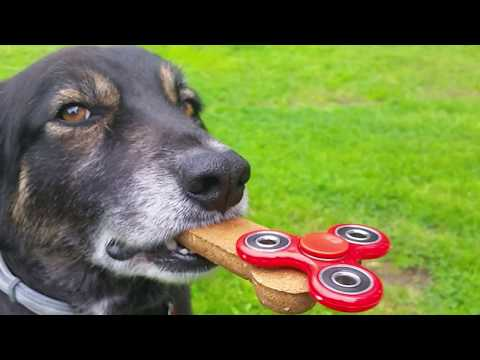 BEST FIDGET SPINNER DOG TRICK