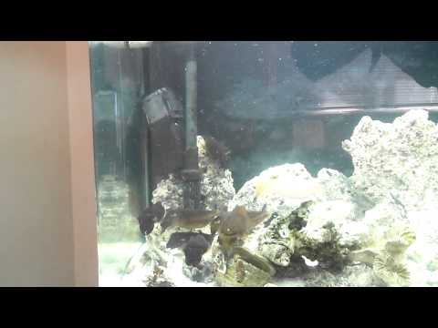 Cuttlefish Aquarium Feeding Time