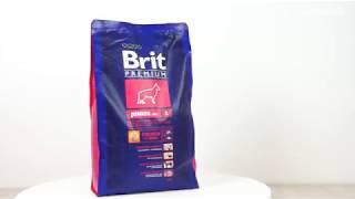 Обзор корма Brit Premium для щенков и молодых собак крупных пород