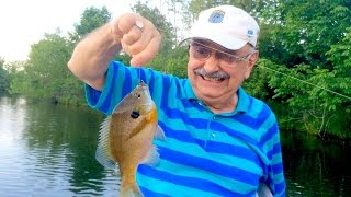Catching Bluegills In The Act