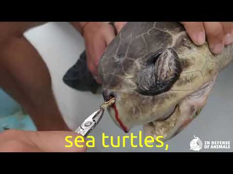 Save Marine Animals From Plastic Waste!