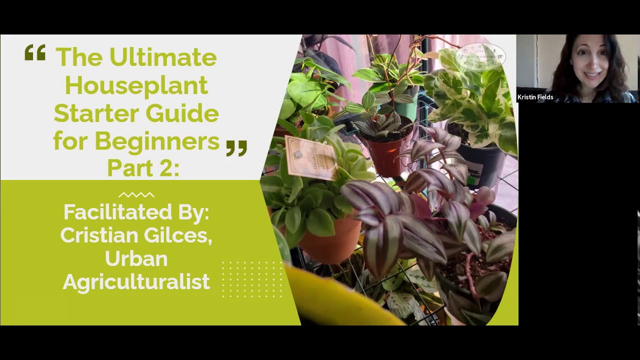 Ultimate Houseplant Guide for Beginners: Part Two (Virtual)