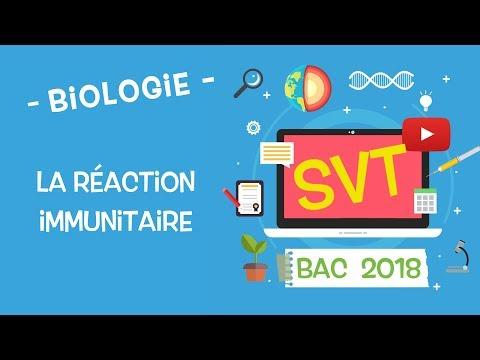 LIVE2018 - Révisions BAC SVT : la réaction immunitaire !