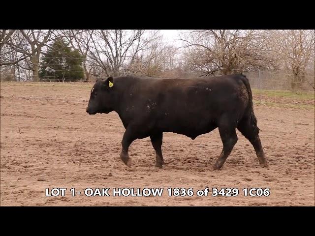 Oak Hollow Lot 1