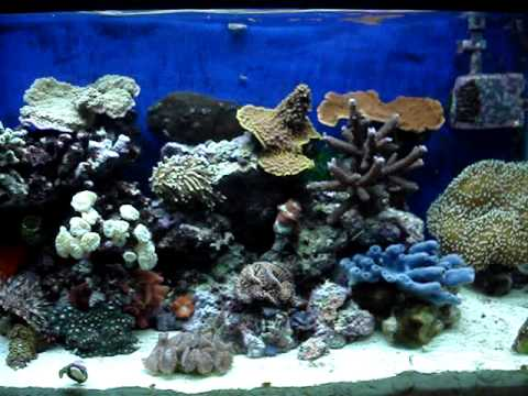 red slime algae cyanobacteria problems amp solutions youtube