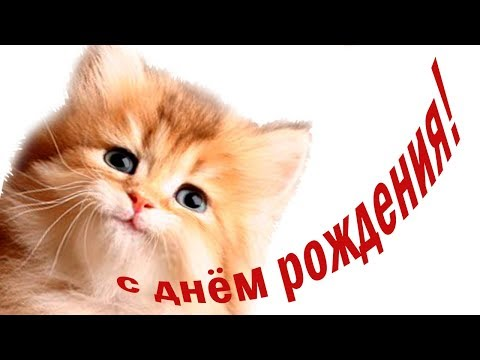 С днем рождения! Милое #поздравление ребенку от котенка Мультяшные поздравления - Видео с YouTube на компьютер, мобильный, android, ios