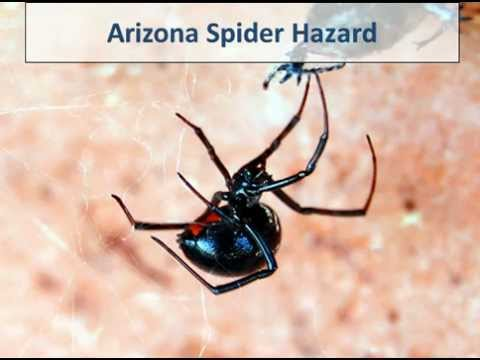 Spiders In Arizona Homes..Stop Them NOW With CareFreeTermite.com