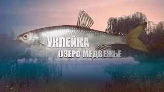 Русская Рыбалка 4 Russian Fishing 4 Озеро Медвежье Уклейка