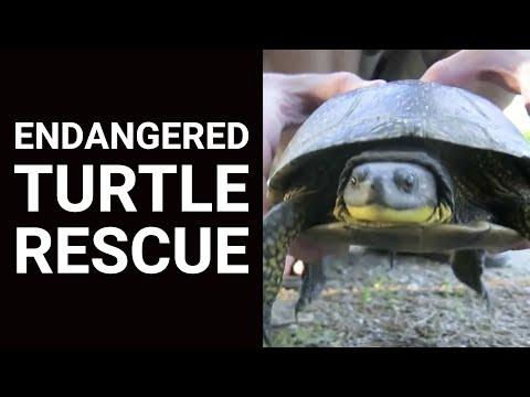 Endanger Turtle Rescue