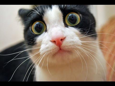 Смешные коты!!! Funny cats, Прикольные, ржачные,веселые