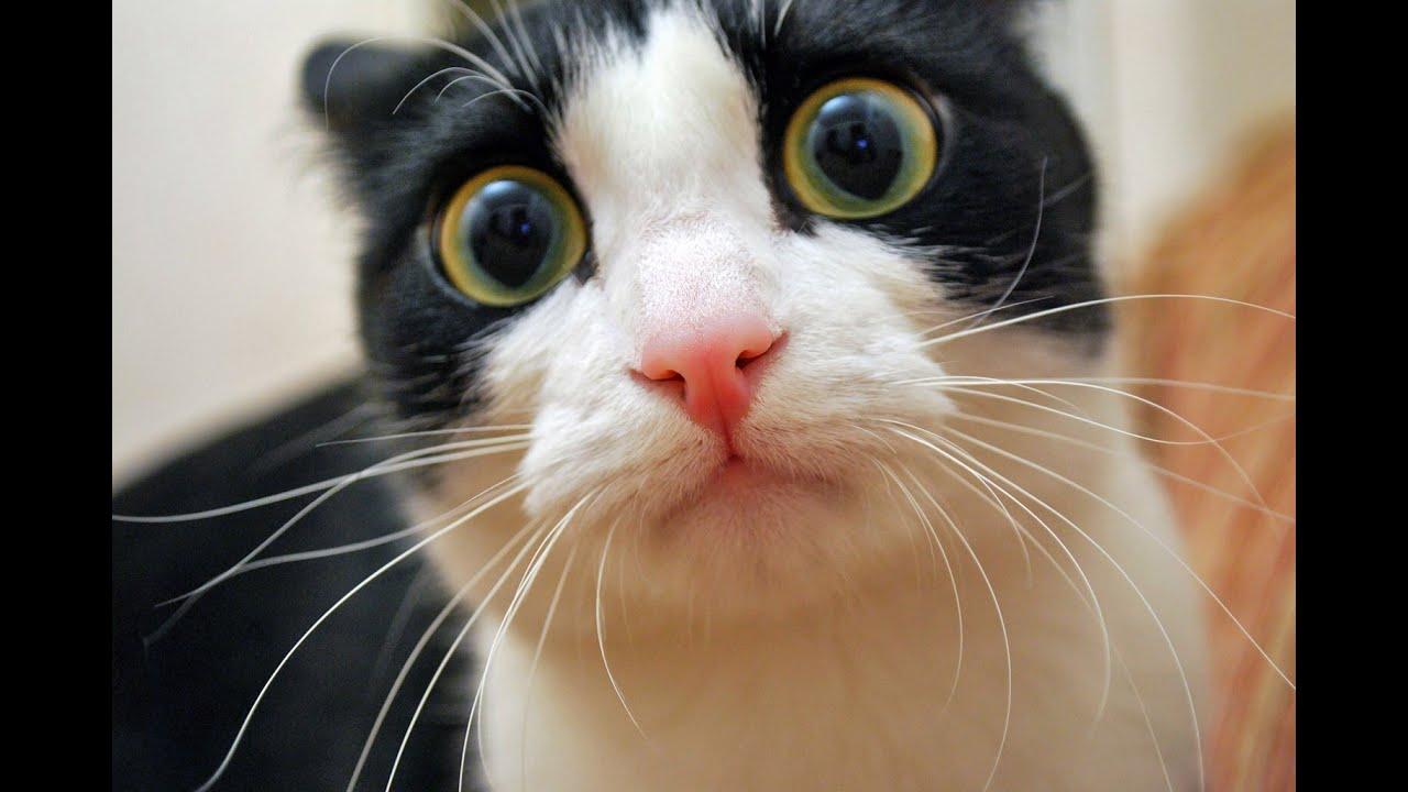 Картинки упоротые коты