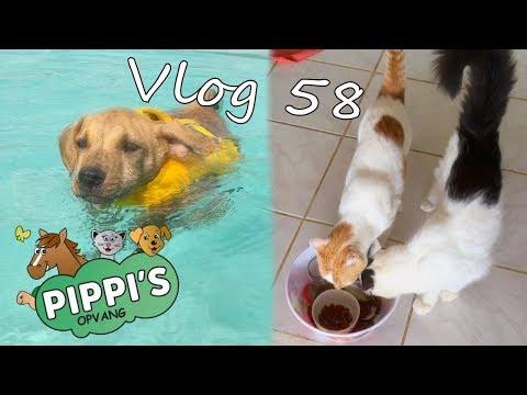 Bowie therapie KOUD op Curaçao en denkwerk voor katten - Vlog 58
