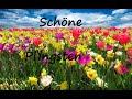 Grußvideo zu Pfingsten mit Whatsapp verschicken - Schöne Pfingstgrüße für Dich