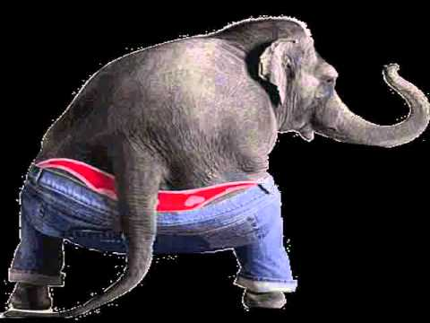 Funny Elephant Dance